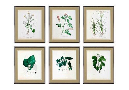 Eichholtz Botanische prints