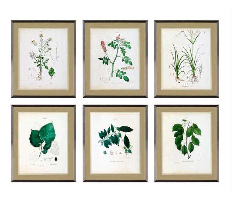 Botanical prints framed - set of 6