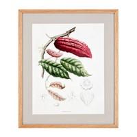 Papaya Cacao Drucke eingerahmt - 4-er Set