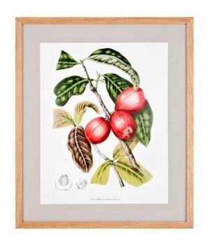 Eichholtz Papaya cacao prints - set of 4