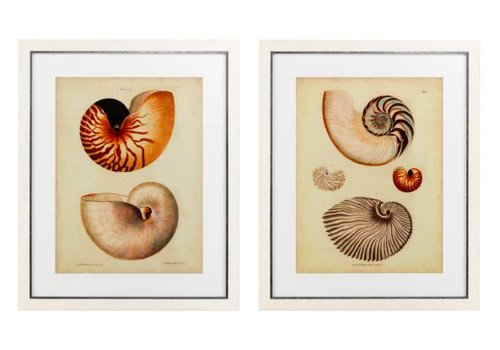 Eichholtz Antique Nautilus prints