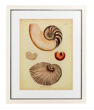 Eichholtz Antique Nautilus prints framed - set of 2