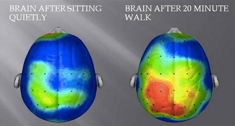 Hersenactiviteit na 20 minuten wandelen