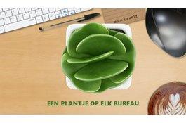 Groen op kantoor; 15% productiever