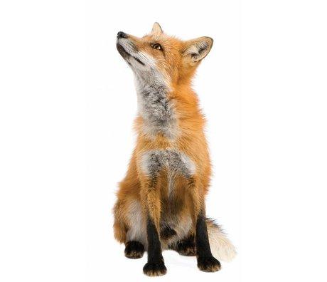 Kek Amsterdam Stickers muraux Fox Forêt ami, brun, 23x46cm