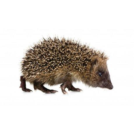 Kek Amsterdam Stickers muraux Hedgehog Forêt ami, brun, 17x10cm