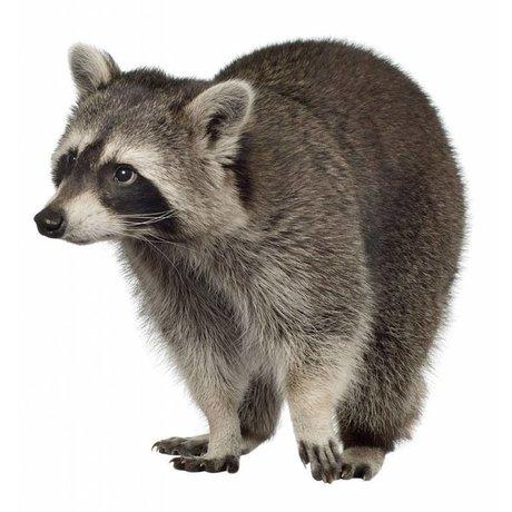 Kek Amsterdam Vægoverføringsbillede Raccoon Forest Friend, 25x25cm
