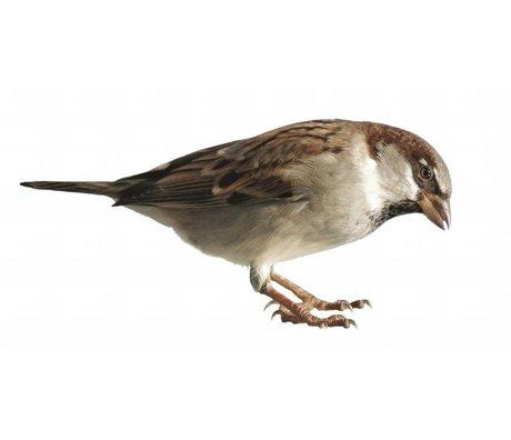 Kek Amsterdam Vægoverføringsbillede Sparrow Forest Friend, 15x7cm
