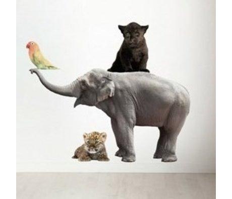 Kek Amsterdam Stickers muraux dans Set de 4 éléphant, panthère noire, oiseau, le léopard, div. Dimensions
