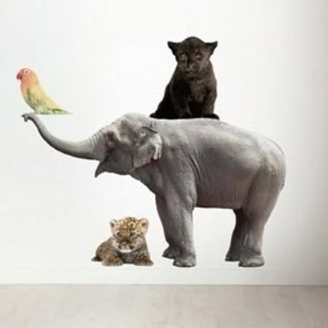 Kek Amsterdam Vægoverføringsbillede i sæt af 4 Elephant, sort panter, fugl, leopard, div. Mål