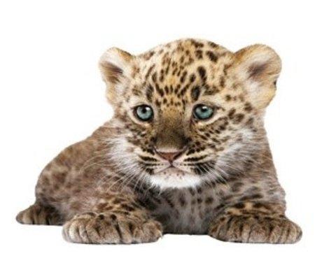 Kek Amsterdam Wall Decal leopard cub, 23x18cm