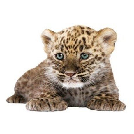 Kek Amsterdam Adesivo leopardo cucciolo, 23x18cm
