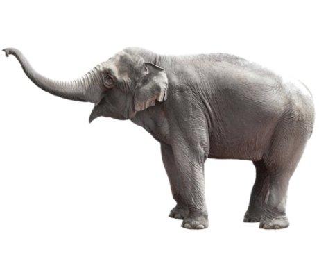 Kek Amsterdam Tatuajes de pared del elefante, 163 x 94 cm