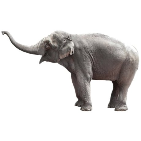 Kek Amsterdam Stickers muraux Elephant, 58x100cm