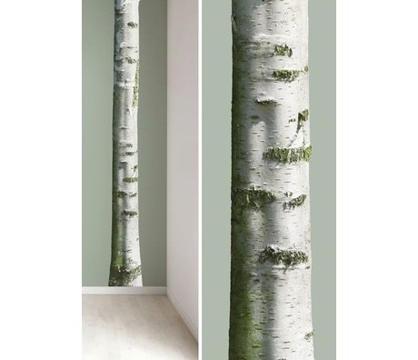 Kek Amsterdam Duvar ağaç gövdesi 'Ev Ağacı 7' vinil, yeşil / kahverengi, 20x300cm çıkartmalar