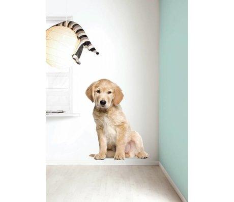 Kek Amsterdam Duvar Çıkartması XL Golden Retriever köpek yavrusu, 91x117cm