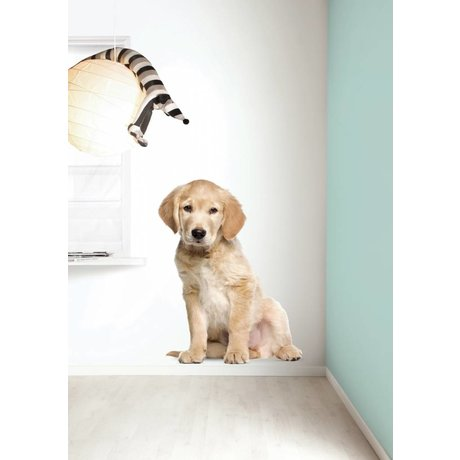 Kek Amsterdam Adesivo XL Golden Retriever puppy, 91x117cm