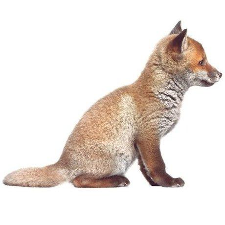Kek Amsterdam Vægoverføringsbillede Baby Fox, brun, 34x26cm