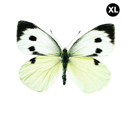 Kek Amsterdam Wall Stickers Butterfly 960 XL, white / brown / gray, 33x24cm