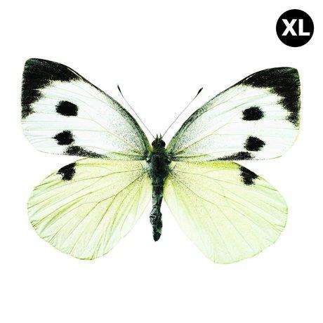 Kek Amsterdam Duvar Sticker Kelebek 960 XL, beyaz / kahverengi / gri, 33x24cm