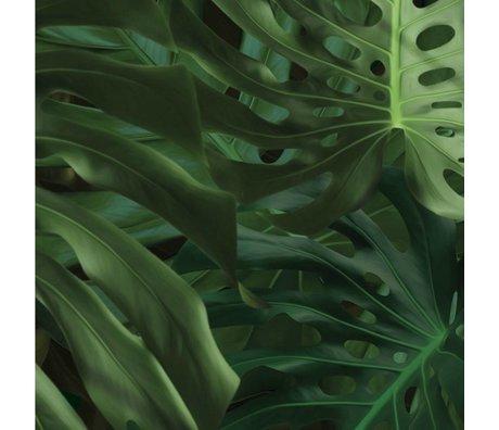 Kek Amsterdam Duvar kağıdı Tropikal Monstera yeşil doku kağıt 97,4x280cm bırakır