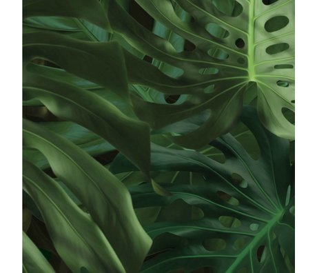 Kek Amsterdam Sfondo tropicale Monstera lascia tessuto verde carta 97,4x280cm