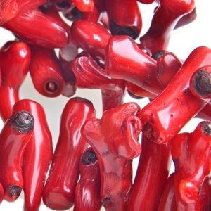 Rood Koraal takje onregelmatig rood ±32x10mm