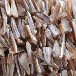 Bruin Schelp tanden beige 7-9mmx25-35mm - 10 stuks