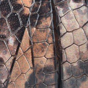 Oranje Plat Italian leer Vintage peach snake 10x2mm - prijs per cm