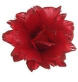 Bloem rood