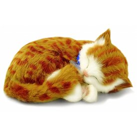 CD3 Perfect Petzzz Orange Tabby Kitten