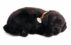 Perfect Petzzz Kittens en Puppies