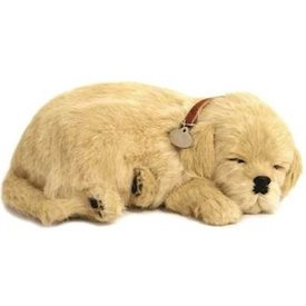 CD3 Perfect Petzzz Golden Retriever Puppy
