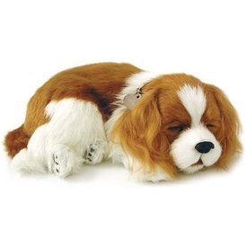 CD3 Perfect Petzzz Cavalier King Charles Spaniel Puppy
