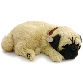 CD3 Perfect Petzzz Mops Puppy Welpe