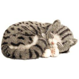 CD3 Perfect Petzzz Graue Tabby / Graues Kätzchen