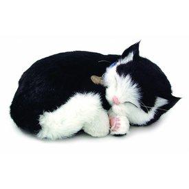 CD3 Perfect Petzzz Zwart Wit Korthaar / Black White Kitten