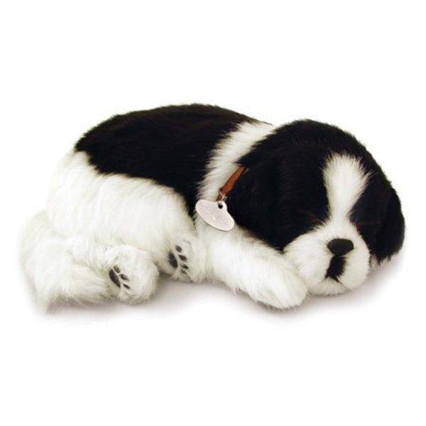CD3 Perfect Petzzz Border Collie Puppy