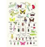 Tinou le joli Senoville poster insects