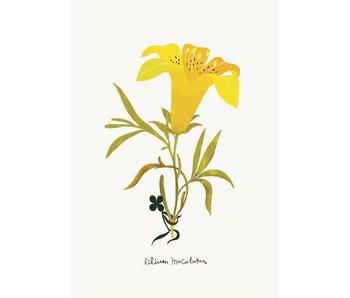 kaart lilium