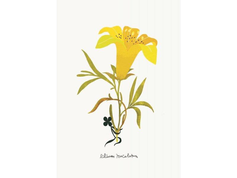 Tinou le joli Senoville kaart lilium