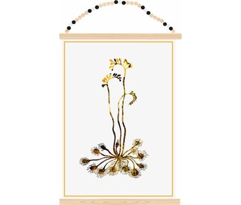 poster kangaroo plant