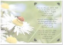 BASTELZUBEHÖR / CRAFT ACCESSORIES 5 fogli trasparenti, fogli A5, poesie per quanto ho te