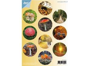 BILDER / PICTURES: Studio Light, Staf Wesenbeek, Willem Haenraets A4 Gestantzte sheet: Autumn