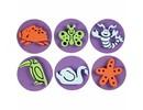 Kinder Bastelsets / Kids Craft Kits Sello de goma espuma: Zoo, un total de 12 diseños