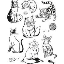 selos transparentes, gatos