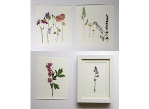 Exlusiv A set of dried and pressed flowers