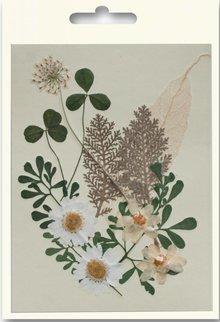 Exlusiv Un insieme di fiori secchi e pressati