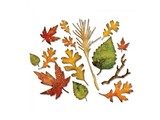 Sizzix Stamping and embossing folder SET: Leaves