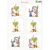 A4, Bilderbogen: Amor del conejito